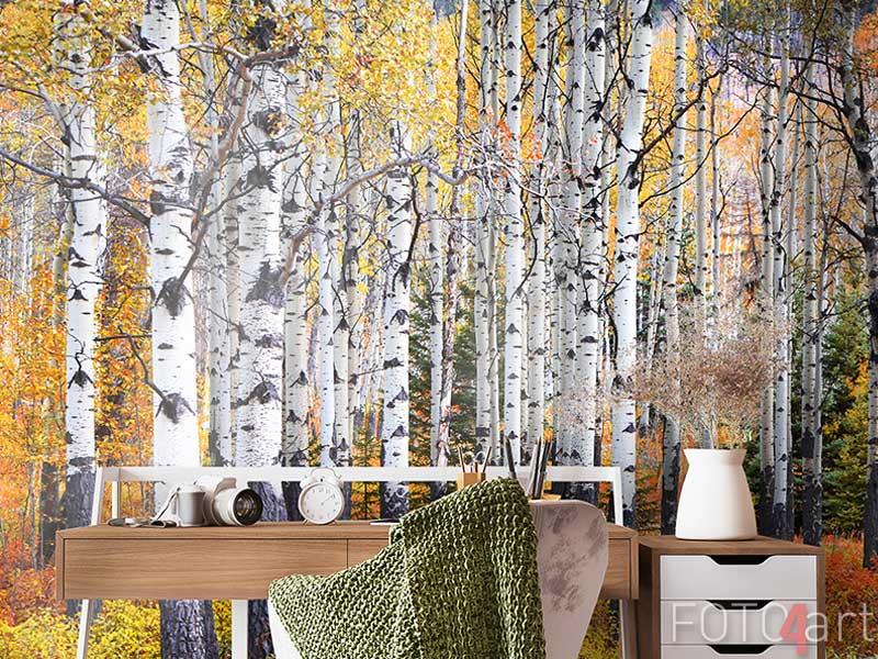 Fototapeten - Many Aspen trees in a