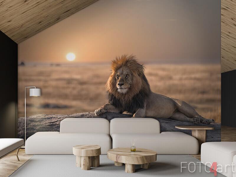 Fototapeten - Ein männlicher Löwe