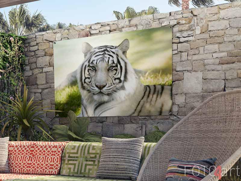 Foto op Gartenposter - Amoer Tijger