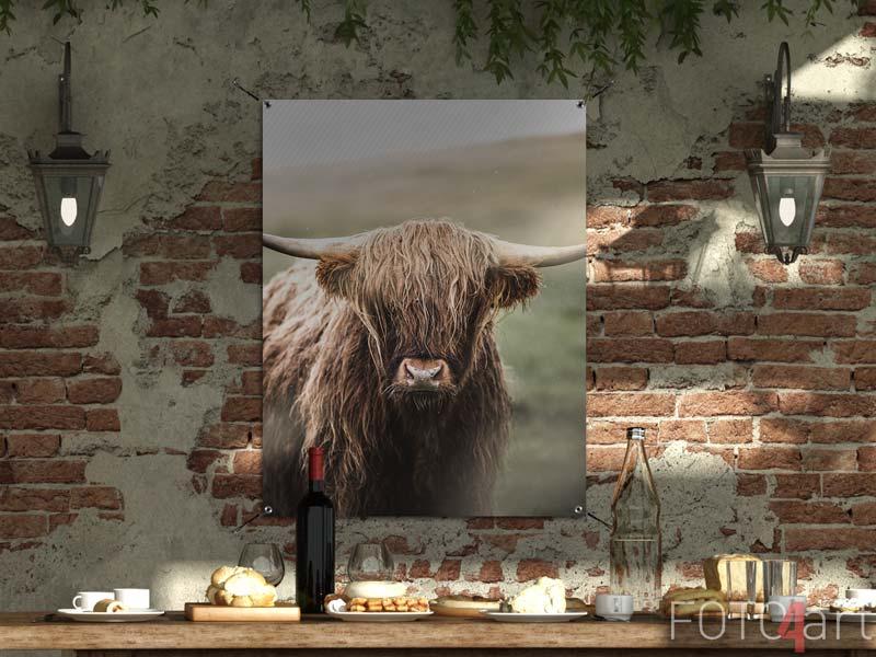 Foto auf Gartenposter - Schotse hooglandkoe