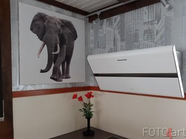 Foto auf Leinwand Elefant
