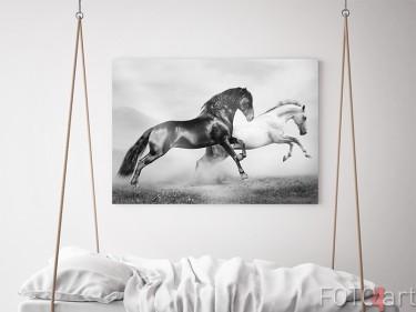 Galoppierende Pferde auf Aluminium