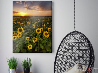Feld der Sonnenblumen auf Leinwand