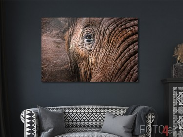 Elefant auf Alu-Dibond