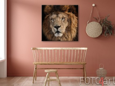 Foto auf Leinwand Löwe
