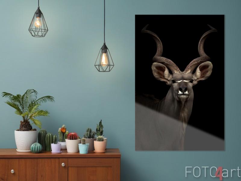 Foto auf Plexiglas des Großen Kudu