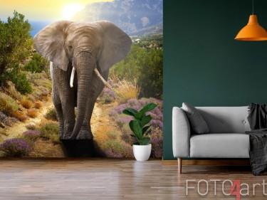 Elefant auf Fototapete