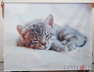 Fotorolgordijnen Kat