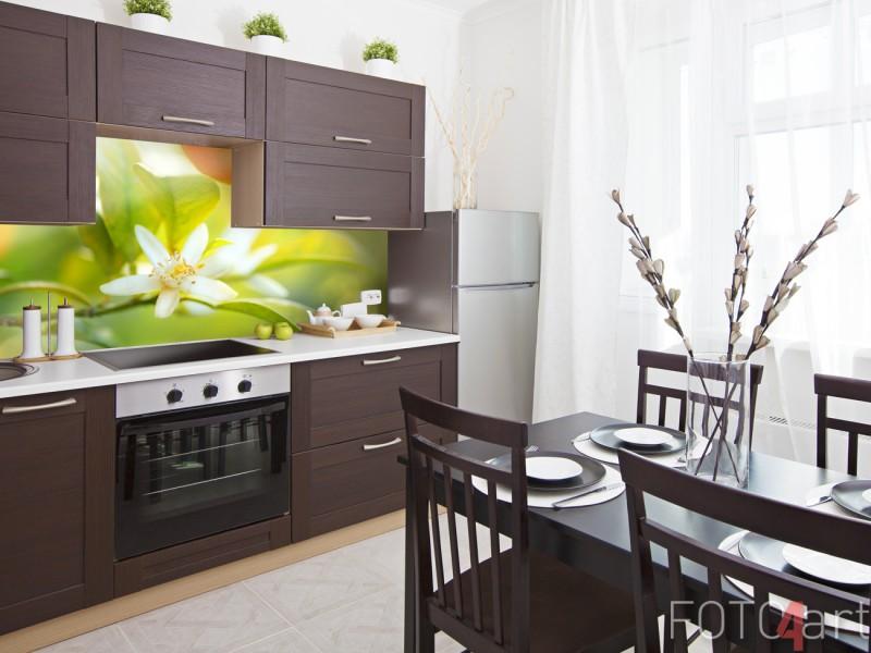 Küchenrückwand Glas mit Foto Orangenbaum