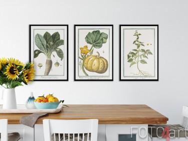 Bild mit Rahmen mit botanischen Illustrationen