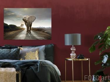 Schlafzimmer mit Photo Elephant auf Plexiglas
